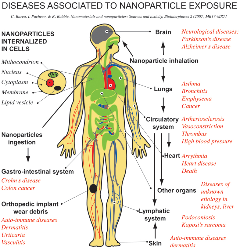 chart of the human body showing diseases associated with nanoparticle exposure