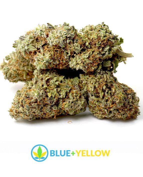Blue Coma Cannabis flowers